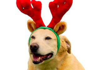 reindeer-dog-horns